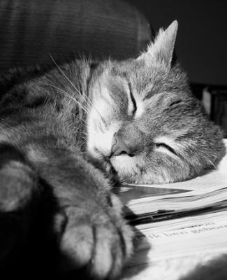 El gatito se ha vuelto ha echar la siesta