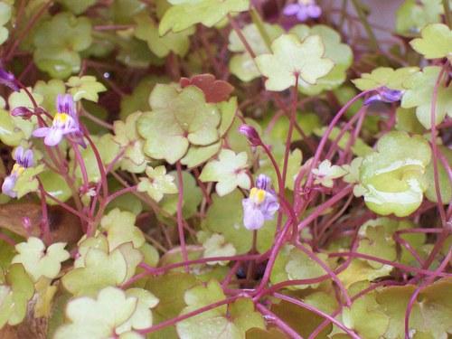 Pequeñas flores familiares que nacen en cualquier sitio