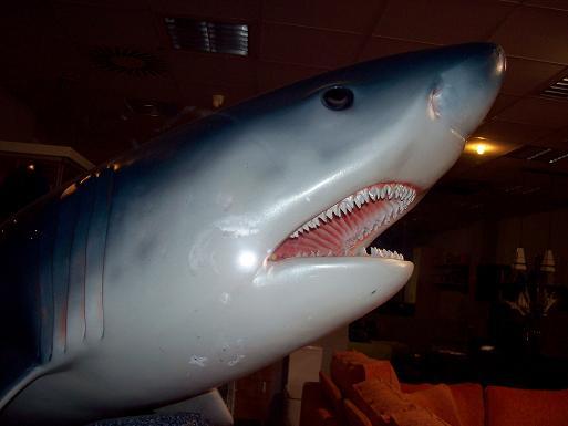 Y de repente en una calle un tiburón te quiere comer