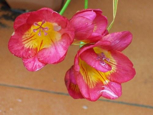 explendor de las flores en primavera